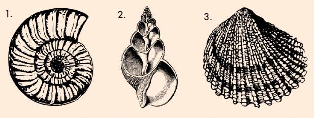 Svaka školjka otkriva vašu skrivenu ličnost – izaberi jednu