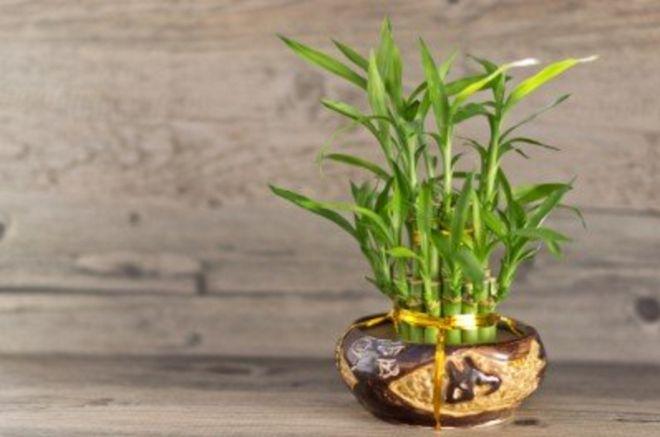 Ako stavite OVE biljke u vašu spavaću sobu, ovo su nevjerovatni EFEKTI na vaše ZDRAVLJE!