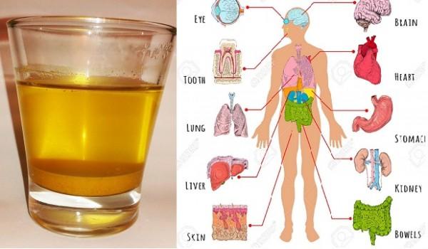 Evo šta se događa vašem tijelu kada pijete jednu šoljicu vode od kurkume svako jutro