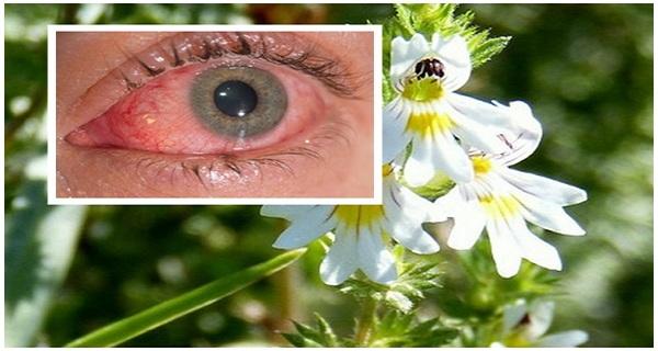 Biljka koja poboljšava VID i kod ljudi starijih od 70 godina, RJEŠAVA probleme s očima, VIDOM i glaukoma