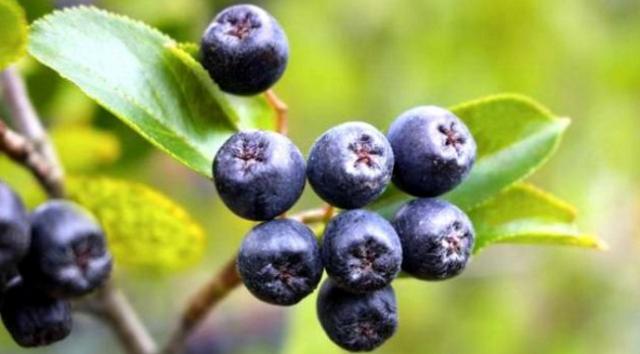 """Najzdravije voće na svijetu """"ubija"""" ćelije raka, viruse i usporava starenje"""