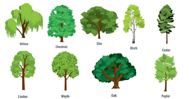 Izaberite jedno drvo i OTKRIJTE šta možete OČEKIVATI u novoj 2018. godini
