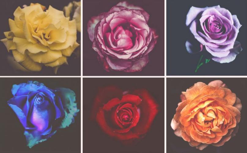 Test ličnosti : Izaberite jednu ružu koja vam je najljepša