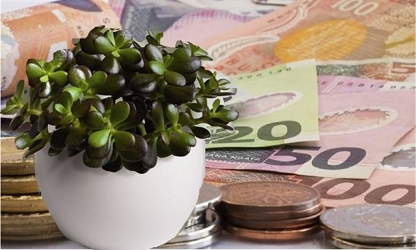 Želite li da privučete novac u vaš dom? Ova biljka će privući novac kao magnet!