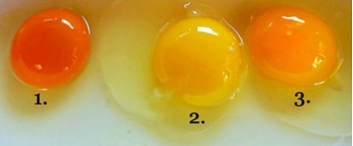 Pogodite koje jaje od ova tri sa slike dolazi od zdrave kokoške