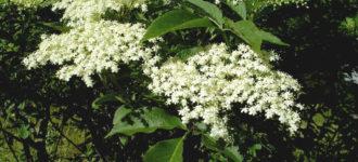 Ovo je Božja biljka koja može da zamjeni sve lijekove – KORISTITE JE!