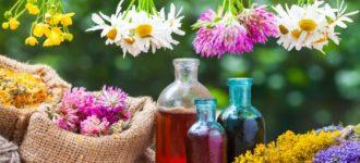 U kojem mjesecu treba BRATI ljekovite biljke? Poklanjamo vam KALENDAR branja biljaka!