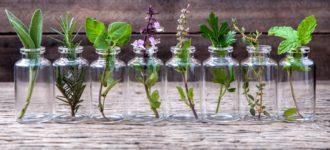 Evo kojih 7 biljaka možete da gajite u vodi: bez zemlje i zalivanja