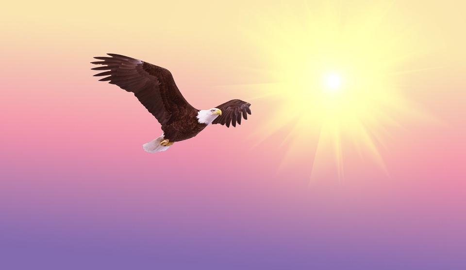 ORLOVA LEKCIJA: Znate li kako ženka orla bira oca za svoje potomstvo?